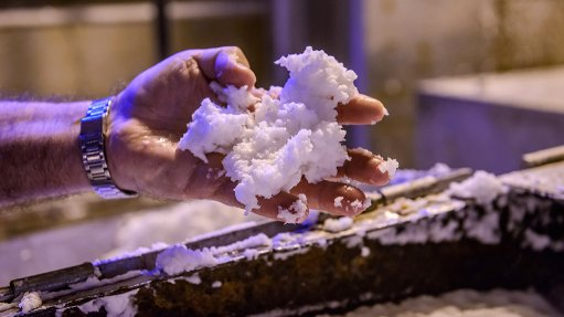 Cellulose production  provides new opportunities