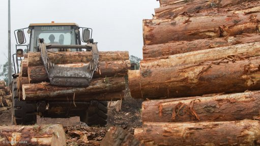 Company empowers  rural communities to grow trees for timber use