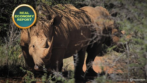 Kruger Park receives R255m for intensive rhino protection zone