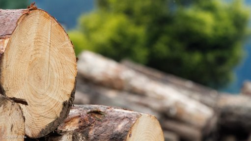 York Timbers earnings down 53%