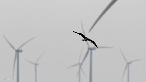 Renewable-energy projects necessitate careful planning – Birdlife SA