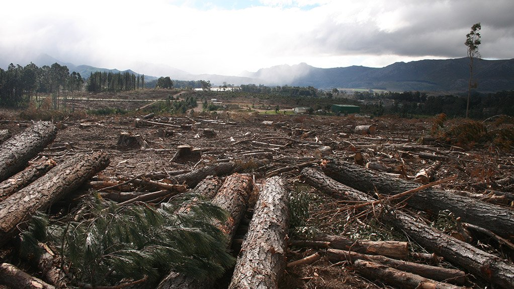DECIMATED These decades-old timber plantations have deteriorated and are becoming unsustainable