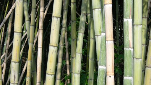 Bamboo group receives $8.6m cover for sustainability project in E Cape