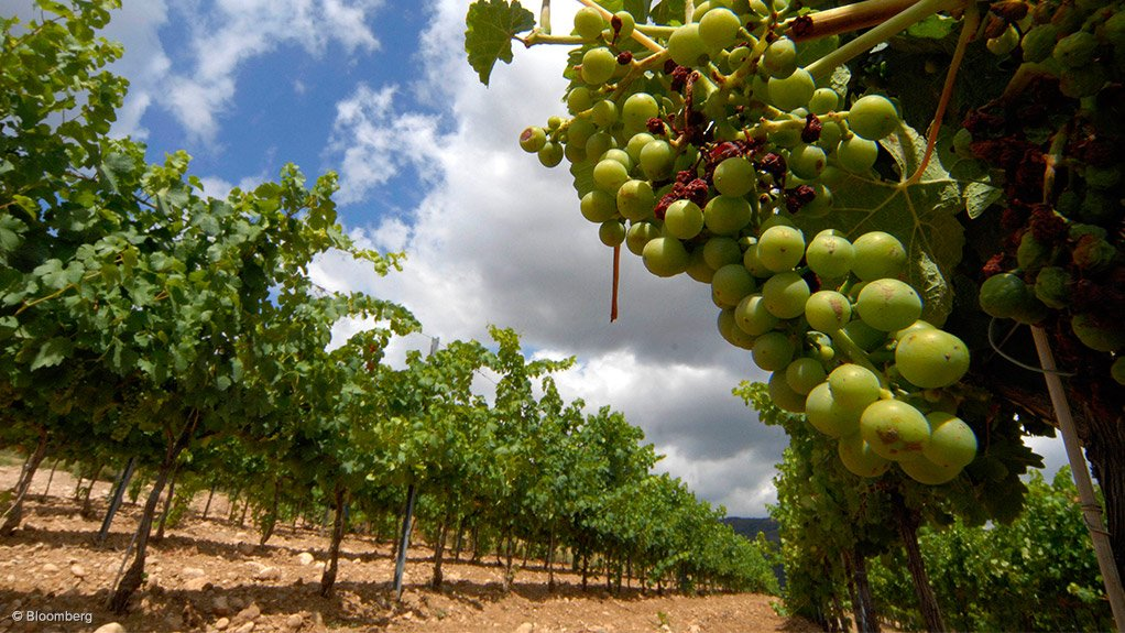 PARTICIPATION INCREASE The South African Fruit and Wine Industry Confronting Climate Change initiative focuses on supporting emerging farmers to calculate their carbon footprint