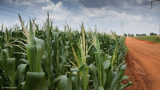 CSIR report to help guide SA's transition to an agricultural green economy