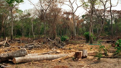 Rate of global deforestation slows – FAO