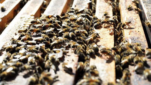 Solution being trialled to fight dwindling  bee population