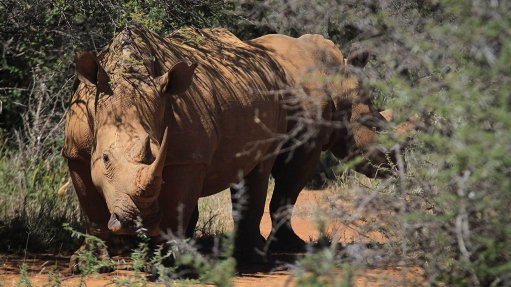 EIAs, rhino poaching biggest concerns for Green Scorpions