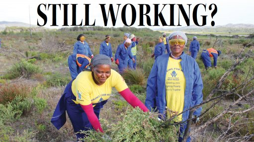 20 years on, Working for Water still making jobs, ecological impression