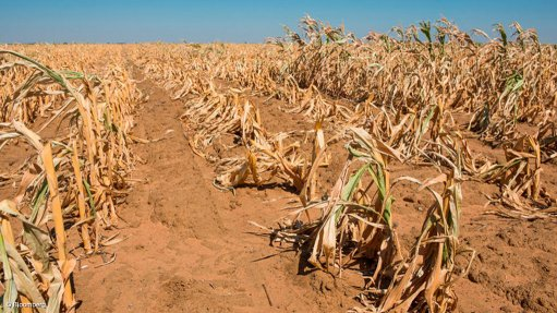 DA warns drought could lead to 'unaffordable' food prices in SA