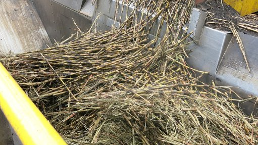 Expected decline in sugar cane crop