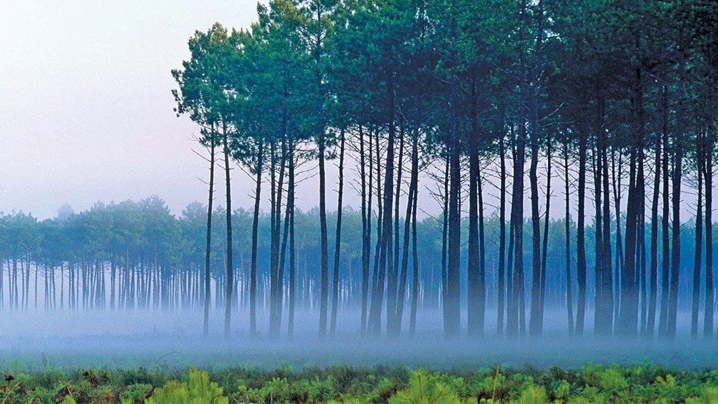 FORESTRY The paper industry aims to stimulate rural development and improve timber yield through forestry initiatives