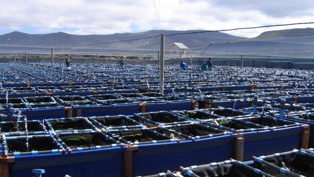 Abalone spearheading SA's aquaculture sector