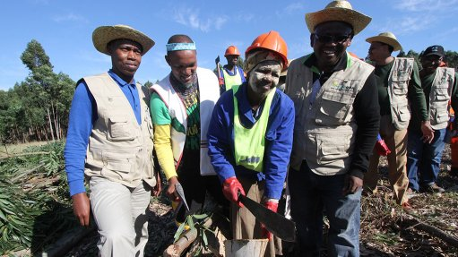 Eastern Cape development agencies' R113m forestry project nets 2 700 ha new afforestation