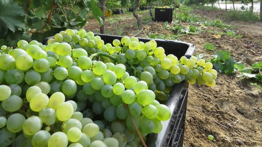 Hot weather, water shortages shrink 2016 wine grape crop by 6.7% y/y