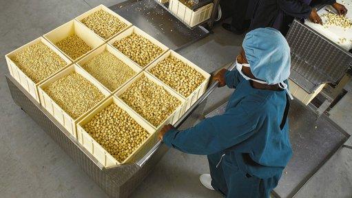 Record macadamia nut prices forecast for 2016 season