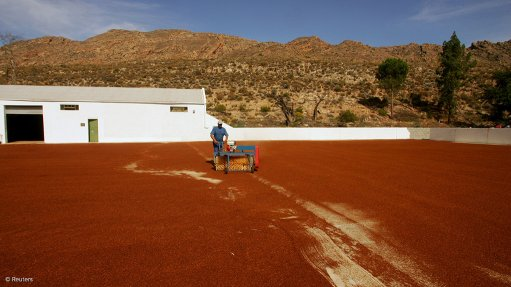 Rooibos, Honeybush among South Africa's most widely commercially cultivated plant products