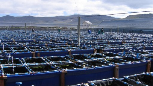 Aquaculture holds strong growth potential for South African economy