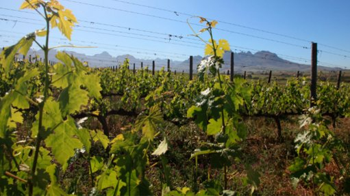 Wine industry under pressure amid subdued economy