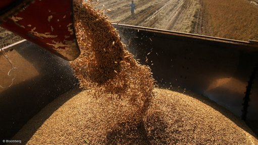 Excessive imports of grain hurting local farmers – Grain SA