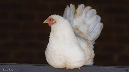 ANC wants government to bail out poultry industry