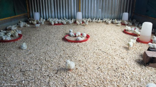 Association highlights the negative impact of poultry imports on the feed industry