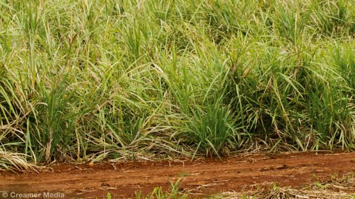 Tongaat's sugar, maize output to rise on improved rainfall