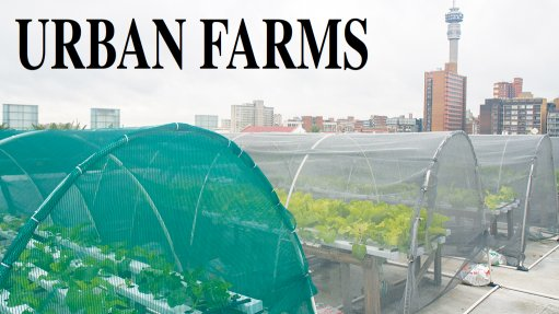 Joburg rooftop gardens bringing agriculture to heart of city living