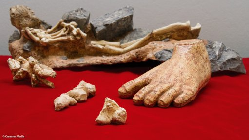 'Little Foot' hominid is much younger than originally thought