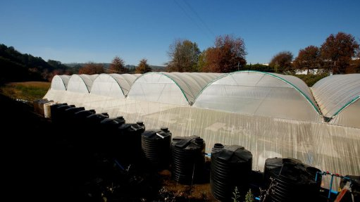 PLANT PROTECTION Haygrove's multispan polytunnel structure provides a controlled environment for the aquaponic and hydroponic systems
