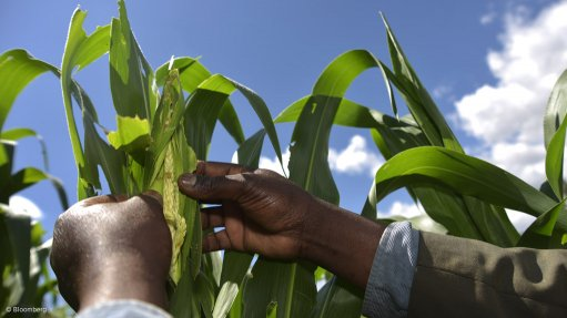 FOOD INSECURITY Food is heavily reliant on water supply. Scarce water supply puts crops and livestock at risk