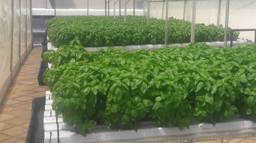 CoM shows off potential of rooftop agriculture in Johannesburg inner city