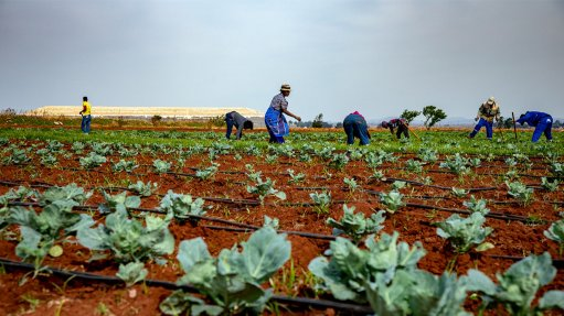 Agri-hub seen as key post-mining-economy jobs driver in west Gauteng