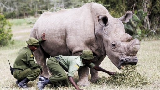 Threat for rhinos still remains despite drop in 2018 poaching numbers