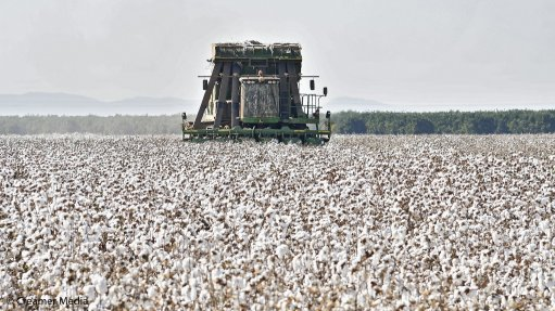 Local cotton lint buying driving clothing and textile industry's revitalisation
