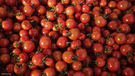 Nigeria's biggest tomato facility idle again as farmers dump crop