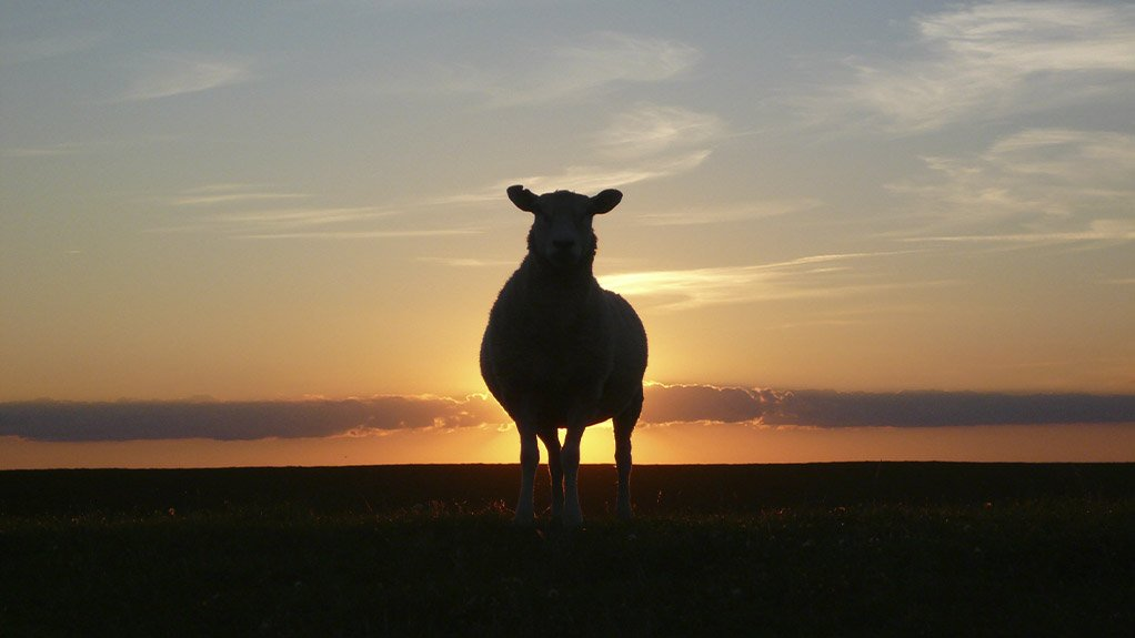 SILENCE OF THE LAMBS The ongoing drought in Sutherland is killing the livelihoods of the sheep farmers in the region
