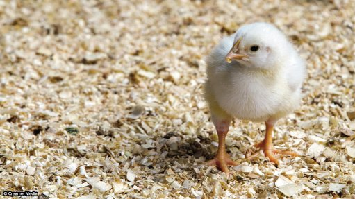 Poultry master plan broadly accepted by industry