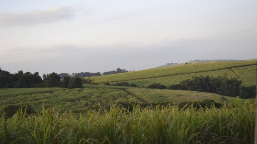 SWEET ESCAPE To ensure sustainable development of the sugarcane sector, there needs to be diversification into sugar ethanol fuel and other cane-derived products