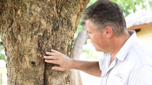 Kruger National Park sets traps for tree-killing beetles