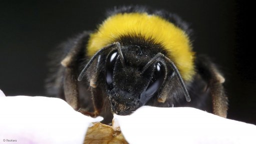 'Drastic' fall in bumblebee populations shocks scientists