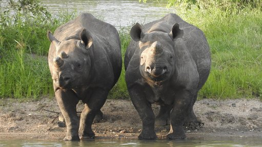 Black rhino population doubles owing to concerted conservation