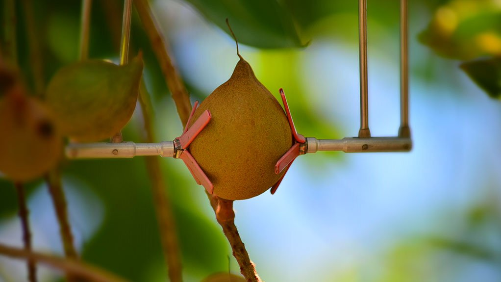 ADVANCING AGRICULTURE The new platform makes all the data from SupPlant's sensors, such as the first continuous measurement fruit sensor on Macadamia fruit in South Africa, easily accessible and understood