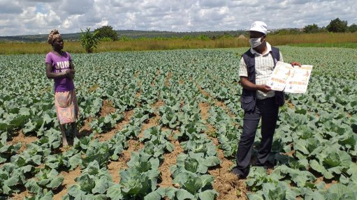 Opinion: Building back better on food and agriculture