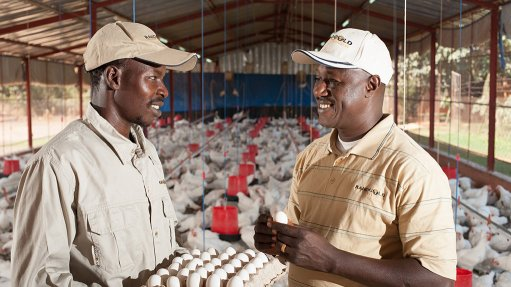 Master plan starts to encourage poultry sector expansion