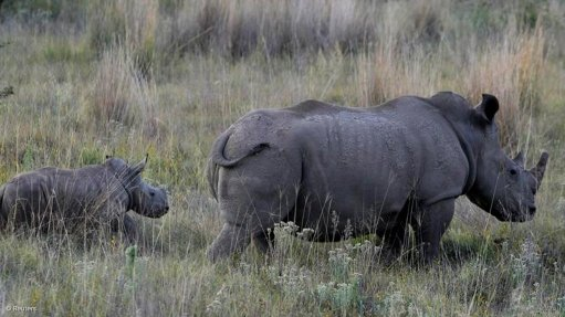 Govt undertakes rhino conservation efforts as world celebrates Rhino Day