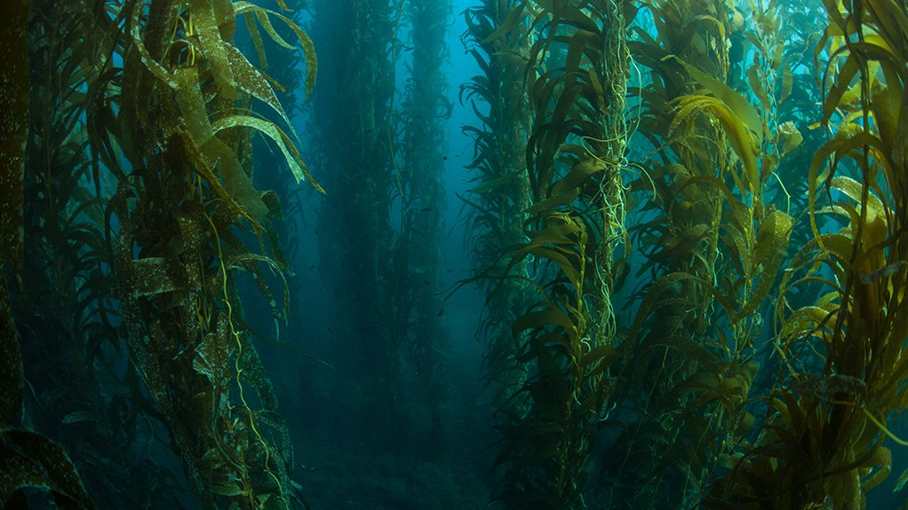 Fund managers start ball rolling on large-scale kelp farm off Namibian coast