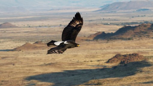 Assessment tool helps developers minimise wind turbine risk to eagles