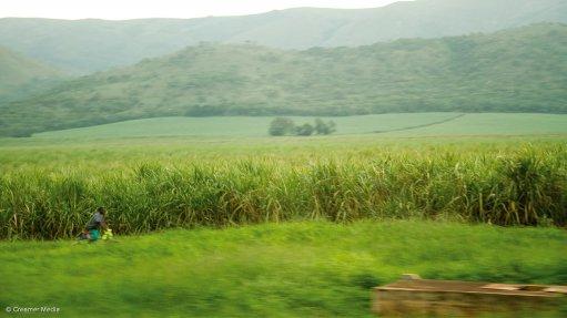 Sugar cane plantation near Malelane
