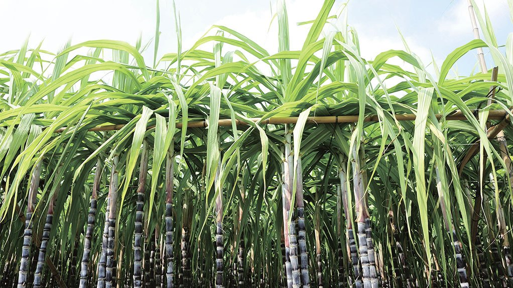 INDUSTRY BACKING BMG works with sugar farmers and engineers at mills by providing components and support services to enhance production, minimise downtime and extend equipment service life